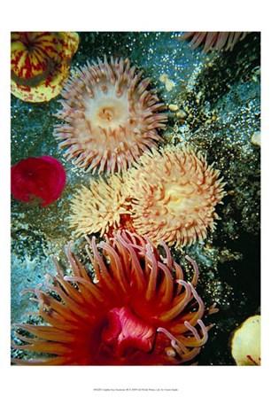 Graphic Sea Anemone III by Vision Studio art print