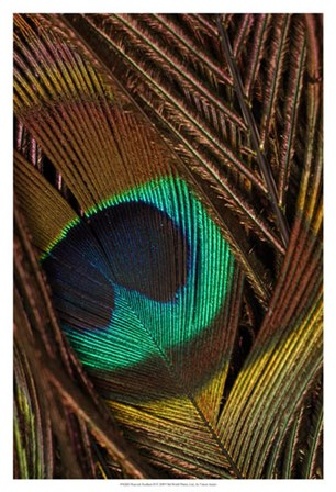 Peacock Feathers II by Vision Studio art print