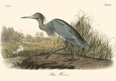 Blue Heron by John James Audubon art print
