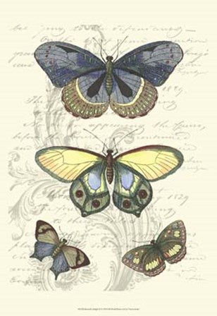 Butterfly Delight II by Vision Studio art print