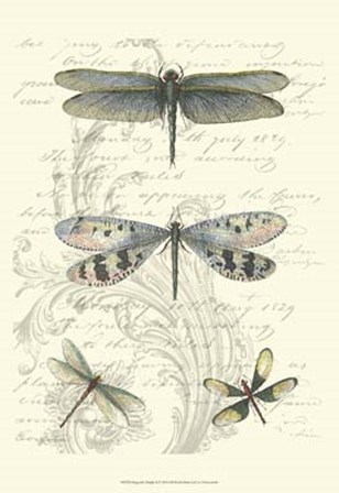 Dragonfly Delight II by Vision Studio art print
