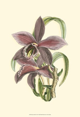 Lilac Orchid I by Vision Studio art print