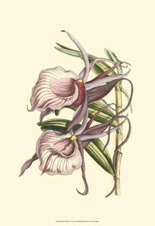 Lilac Orchid IV by Vision Studio art print