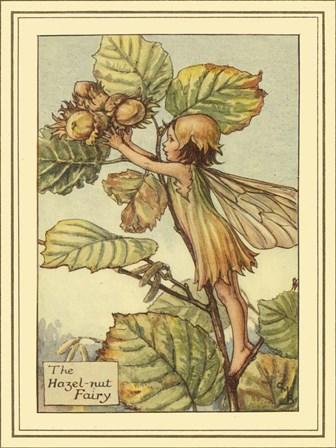 The Hazelnut Fairy by Vision Studio art print