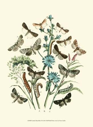 Garden Butterflies II by Vision Studio art print