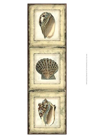 Small Rustic Shell Panel I by Vision Studio art print