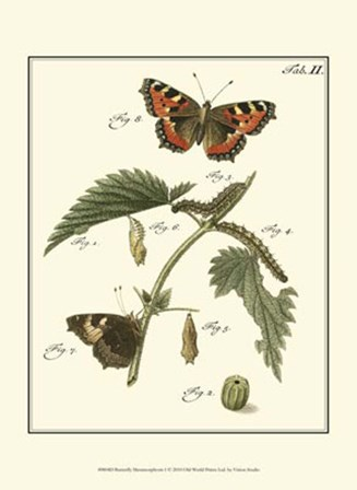 Butterfly Metamorphosis I by Vision Studio art print
