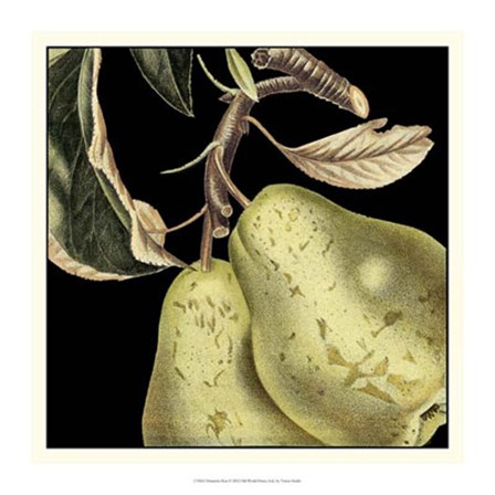 Dramatic Pear by Vision Studio art print