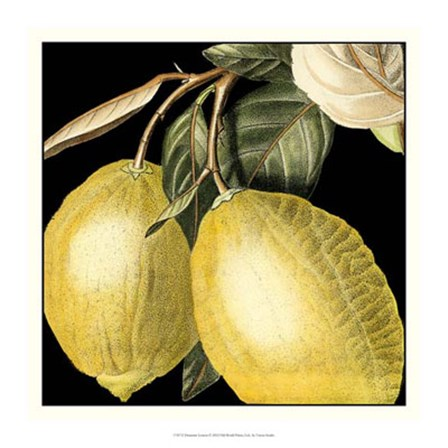 Dramatic Lemon by Vision Studio art print