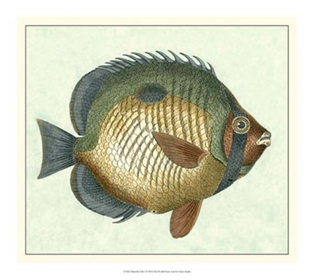 Butterfly Fish I by Vision Studio art print
