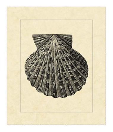 Vintage Shell II by Vision Studio art print