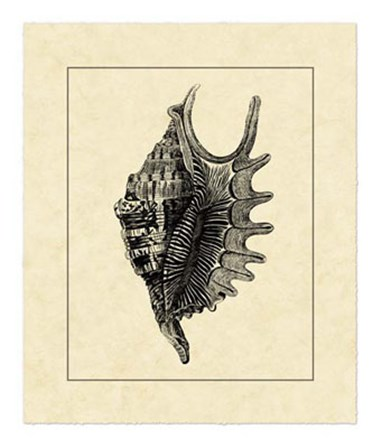 Vintage Shell III by Vision Studio art print