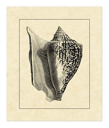 Vintage Shell IV by Vision Studio art print