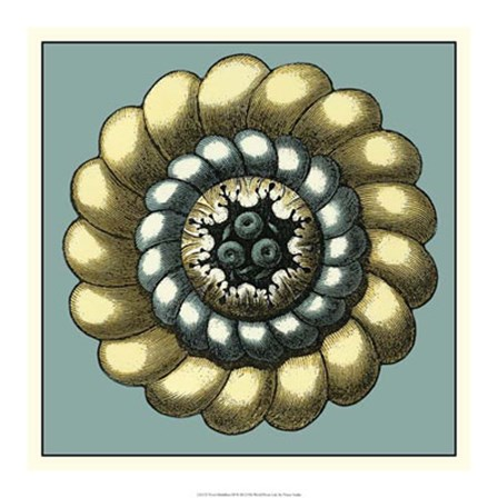Floral Medallion III by Vision Studio art print