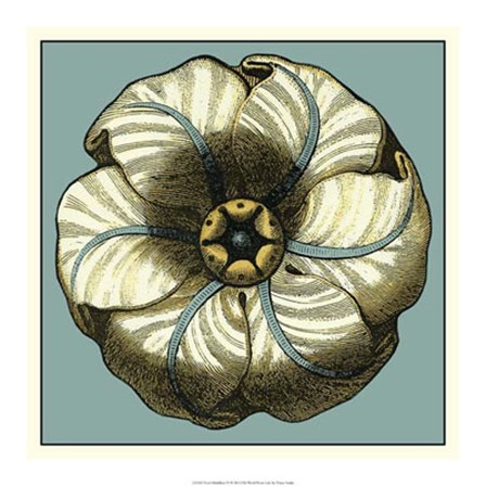 Floral Medallion IV by Vision Studio art print
