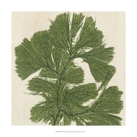 Brilliant Seaweed IV by Vision Studio art print