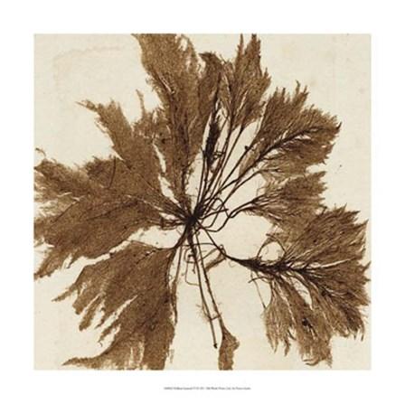 Brilliant Seaweed VI by Vision Studio art print