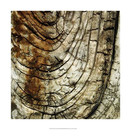 Nature's Textures III by Vision Studio art print
