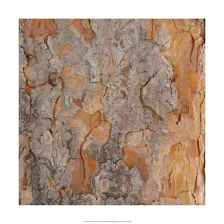 Nature's Textures VII by Vision Studio art print