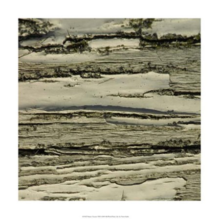 Nature's Textures VIII by Vision Studio art print