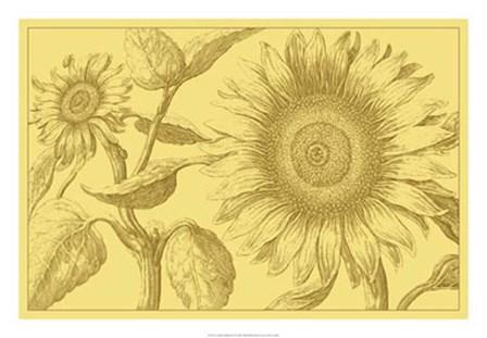 Golden Sunflowers I by Vision Studio art print