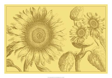 Golden Sunflowers II by Vision Studio art print