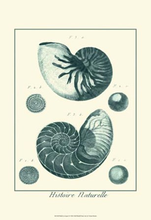 Shells in Aqua I by Vision Studio art print