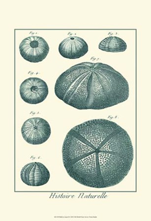 Shells in Aqua II by Vision Studio art print