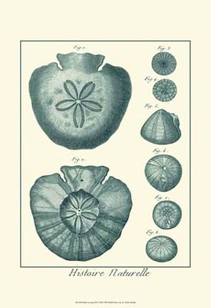 Shells in Aqua III by Vision Studio art print