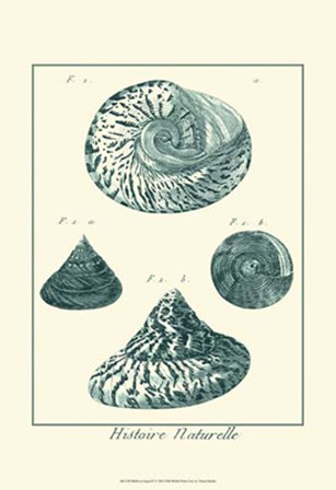 Shells in Aqua IV by Vision Studio art print