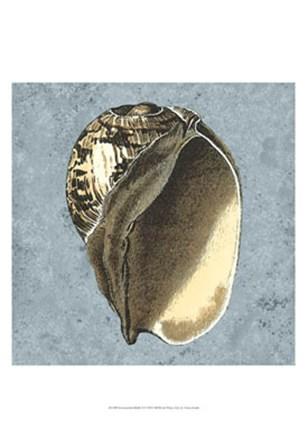 Stonewashed Shells II by Vision Studio art print