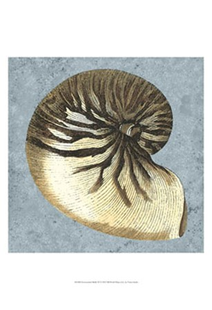 Stonewashed Shells III by Vision Studio art print