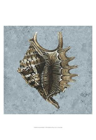 Stonewashed Shells V by Vision Studio art print