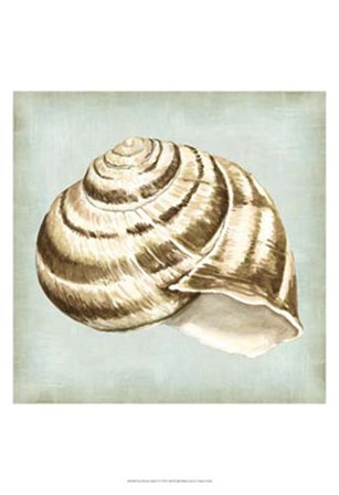Sea Dream Shells I by Vision Studio art print