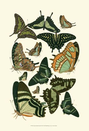 Green Butterfly Study by Vision Studio art print