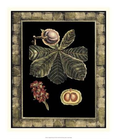 Tropical Bounty II by Vision Studio art print