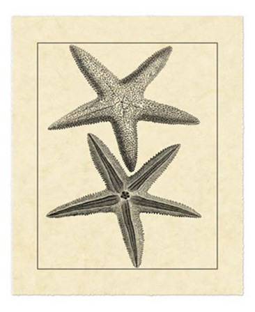 Antique&Deckle Vintage Starfish I by Vision Studio art print