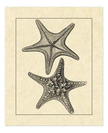 Antique&Deckle Vintage Starfish II by Vision Studio art print