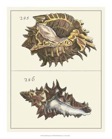 Seashell Menagerie I by Vision Studio art print
