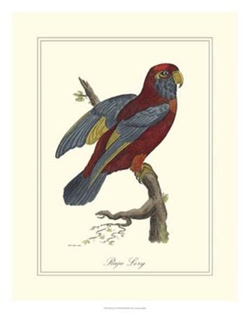 Raja Lory by George Edwards art print
