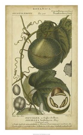 Exotic Botanica I by Pierre Jean Francois Turpin art print