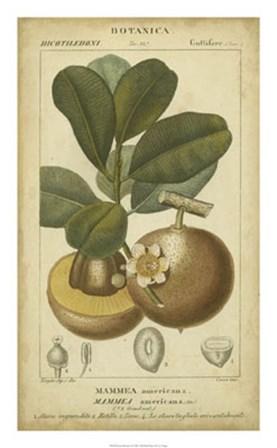Exotic Botanica II by Pierre Jean Francois Turpin art print