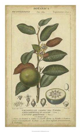 Exotic Botanica III by Pierre Jean Francois Turpin art print