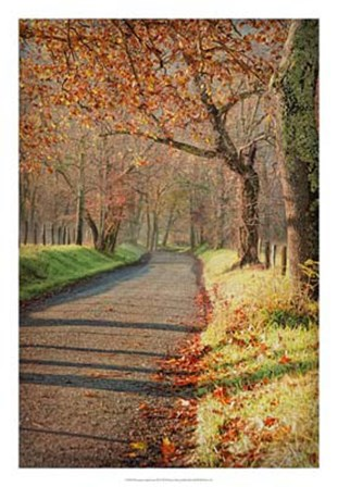 Morning on Sparks Lane III by Danny Head art print