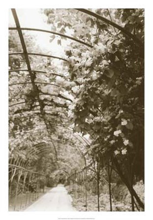 Royal Botanical Garden, Madrid by Meg Mccomb art print