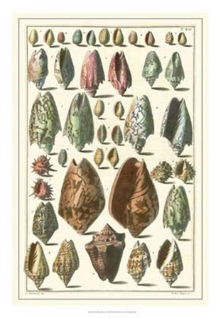 Shell Collection I by Albertus Seba art print