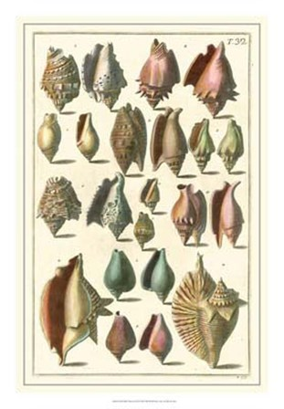 Shell Collection III by Albertus Seba art print
