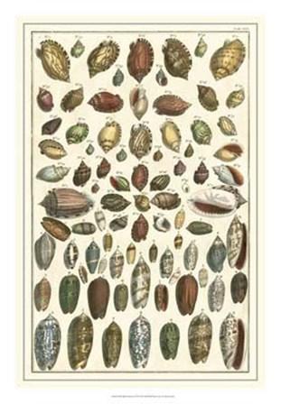 Shell Collection VI by Albertus Seba art print