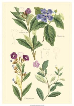 Botanical I by Dr. David Dietrich art print