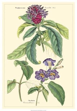 Botanical III by Dr. David Dietrich art print